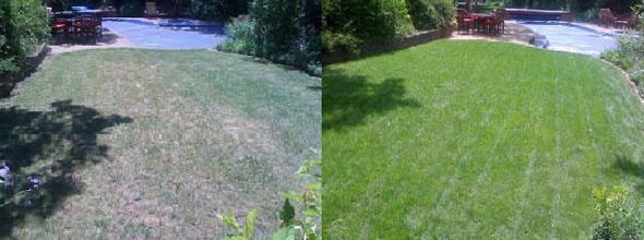 Organic Lawn Care Service in Miami
